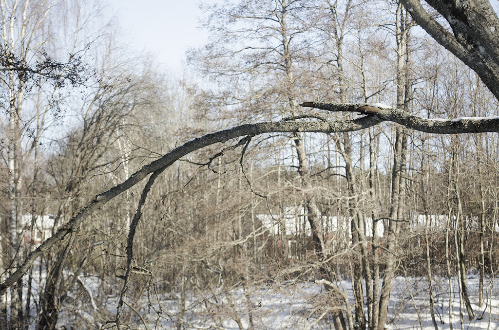 An Old Branch, Digital Photography, 2018 Tiina Alvesalo